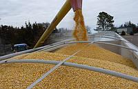 Прискорився експорт зерна