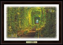 "Эко-картина. Клевань. ""Тунель кохання"""