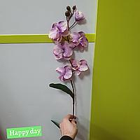Цветы орхидея 1630-4