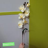 Цветы орхидея 1630-11