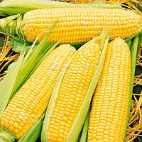 Кукуруза Спирит F1 840 гр