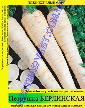 Семена петрушки «Берлинская» 10 кг (мешок), фото 2