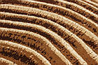 Ковер современный CALIFORNIA 0297 2Х2,9 БЕЖЕВЫЙ прямоугольник, фото 2
