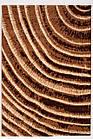 Ковер современный CALIFORNIA 0297 2Х2,9 БЕЖЕВЫЙ прямоугольник, фото 3