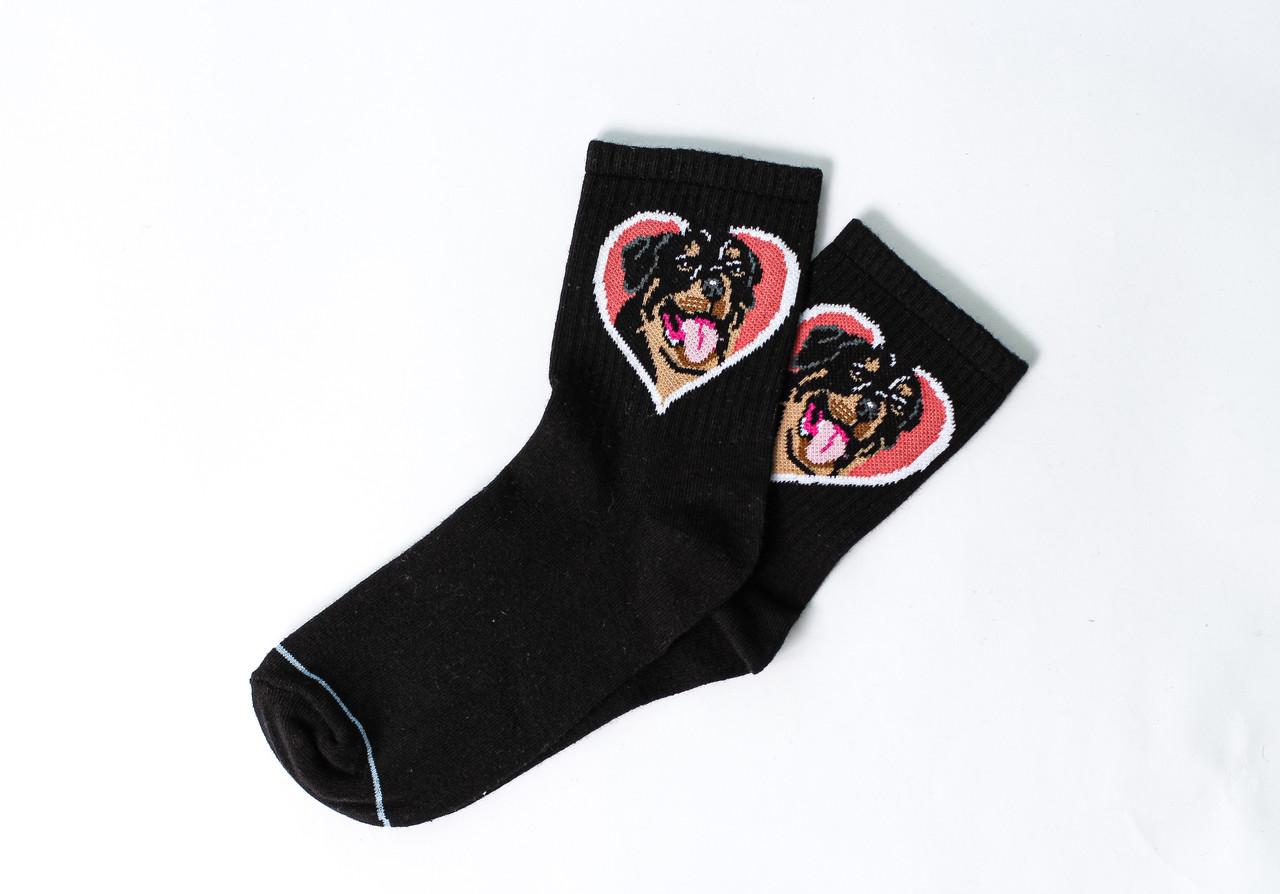 Шкарпетки Crazy Llama`s Собаки в серці