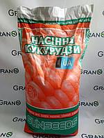Семена кукурузы Оржиця 237 МВ ФАО – 240