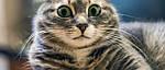 Почему стоит начать с когтеточки для кошкек?