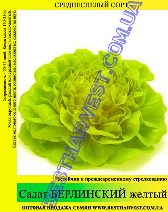 Семена салата Берлинский Желтый 0,5кг, фото 2
