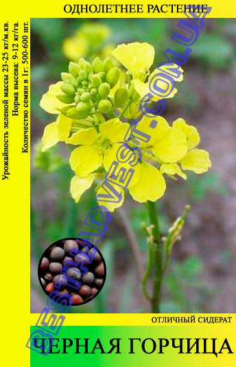 Семена Горчица Черная 25 кг (мешок)