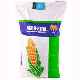 Семена кукурузы Монблан ФАО 320