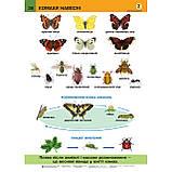 Таблиці Природознавство 2 клас НУШ Авт: Гладюк Т. Вид: Богдан, фото 4