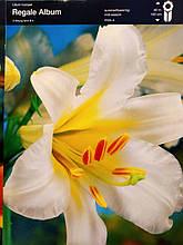 """Цибулина Лілія трубчаста біла Lilium trumpet Regale Album, 1 шт оригінал маточник, """"Junior"""", Голландія"""