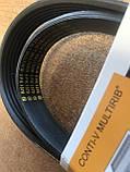 Ремень генератора 6PK-1370 Волга, Газель, с ГУР (Contitech), фото 2