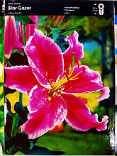 Лілія цибулина орієнтальна темно-рожева з вкрапленнями Star Gazer, Junior, Голландія 1 шт