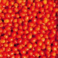 Томат черри Френзи F1 - Lark Seeds (Ларк Сидз), уп. 1000 семян (детерминантный)