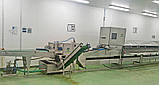 Повна автоматична лінія консервації спаржі 114 шт/год, фото 4