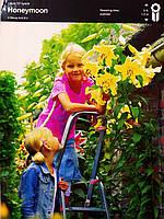 Лилия луковица ОТ гибрид лимонно-желтого  цвета Honeymoon 1,50см,1 шт, Junior, Голландия