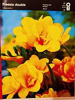Луковица Фрезии махровой желтой 5 шт, Freesia double Junior, Голландия