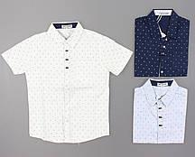 {есть:8 лет 128 СМ} Рубашка для мальчиков Setty Koop, Артикул: CA009 [8 лет 128 СМ]