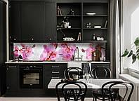 Кухонный фартук Орхидея Сакраменто  (фотопечать на кухню цветы, виниловая пленка розовые орхидеи капли росы)