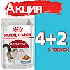 Корм Роял Канин Инстинктив Royal Canin Instinctive in jelee корм для кошек в желе 85 г(4+2)