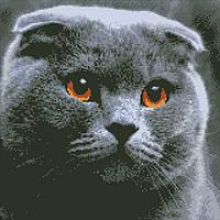 """Алмазная вышивка на холсте с подрамником, Кот """"Домашний любимец"""" 40*40 см, фото 1"""