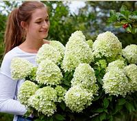Как правильно посадить гортензии, азалии, рододендроны!