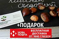 Каштан съедобный семена (8-10 грамм) 10 шт (Castánea satíva, посевной) для саженцев насіння на саджанці