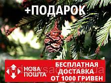 Секвойя семена 20 шт (вечнозелёная, красная, Sequoia sempervirens) для саженцев + инструкции + подарок