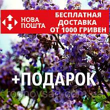 Павловния войлочная семена (около 2500 шт) для саженцев, насіння Paulównia tomentósa + инструкция + подарок