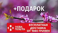 Церцис европейский семена 10 шт (багряник, иудино дерево,Cercis siliquastrum) для саженцев насіння на саджанці