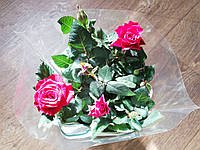 Роза комнатная Red