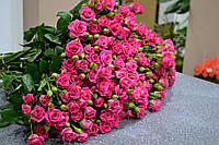 Фунгициды и инсектициды для здоровья розовых кустов