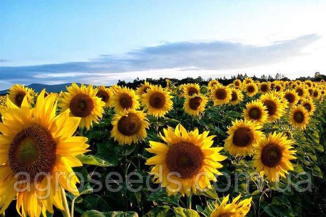 Большой выбор гербицидов и средств защиты растений в Украине