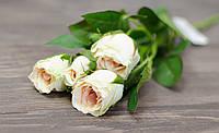 Гілка бутонів троянд ніжно-кремового кольору преміум, фото 1