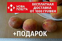 Персик ранний(июль) семена (10 штук) насіння, косточка,семечка для выращивания саженцев + инструкция, фото 1