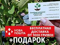 Жимолость съедобная(їстівна) семена (20 штук) для саженцев(насіння на саджанці)