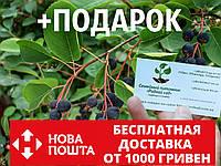 Ирга семена (20 штук) для выращивания саженцев (насіння на саджанці) + инструкция