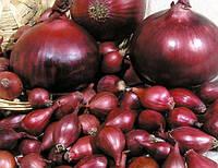Цибуля севок (червоний) Ред Барон 10 кг