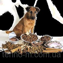 Корм для домашних животных: кошек и собак