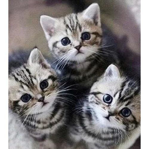 Алмазная вышивка Три маленьких котеночка