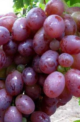 Виноград Ризамат, фото 2