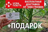 Бамия семена (20 штук) (окра, Абельмош съедобный, гомбо, дамский пальчик) Abelmoschus esculentus