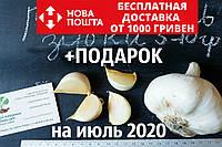 Рокамболь испанский зубки 5-10 грамм (10 штук) (слоновий чеснок семена) гигантский лук-чеснок, насіння часнику
