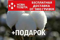 Хлопок семена (10 штук) хлопчатник обыкновенный (Gossypium hirsutum) насіння + подарок, фото 1