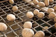 Бо сортувальник картоплі Schouten 4 т/год