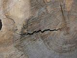 Слеб американського горіха, фото 3