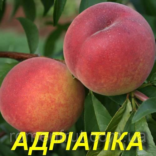 """Саженцы персика """"Адриатика"""""""