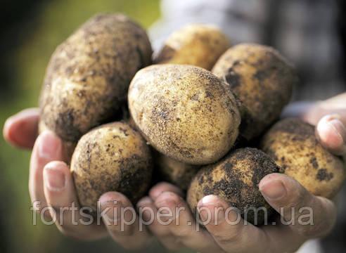 Бу машина для мойки картофеля 3 т/ч