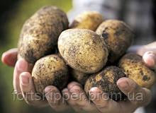 Бо машина для миття картоплі 3 т/год